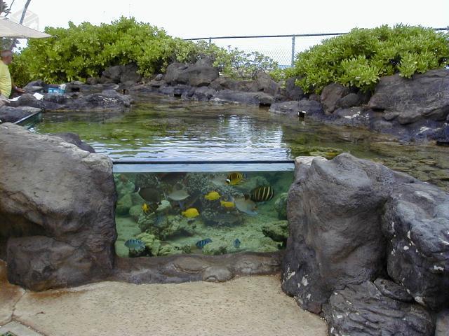 Cascatas e lagos ornamentais em rochas artificiais for Filtros para estanques pequenos