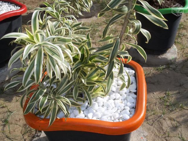 enfeites para mini jardim : enfeites para mini jardim:plantas e enfeites p jardim r