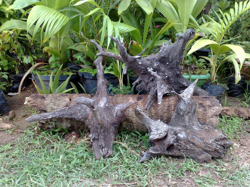 decoracao para jardim com troncos de arvores bromelias e  Vazlon