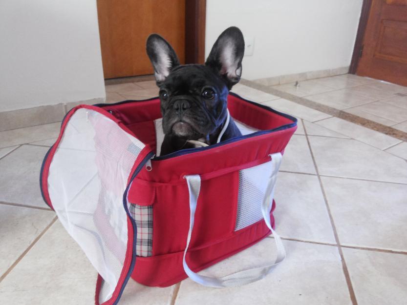 Bolsa Para Transporte De Cachorro Em Avião : Aeropet bolsa de transporte caes em aviao vazlon brasil