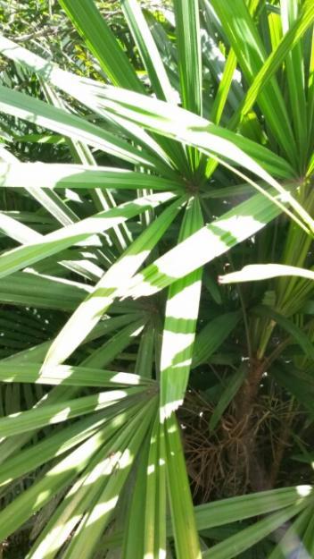 Plantas Para Jardim No Brasil Harri Lorenzi Download