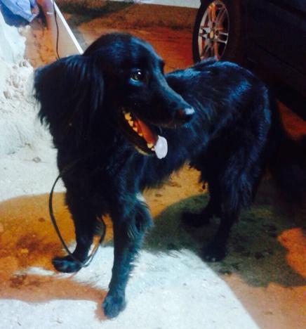 Animais e acessórios em Goiânia, Anápolis e região, GO | OLX