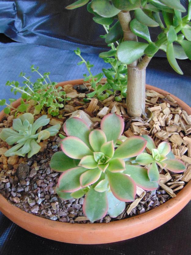 mini jardim terrario : mini jardim terrario:Mini Jardim terrario em Salvador