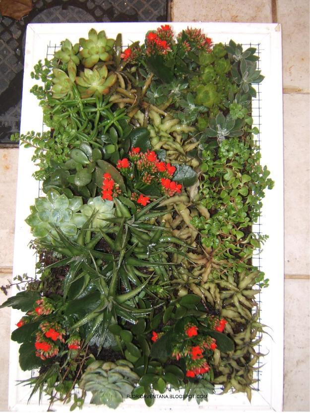 jardim vertical fortaleza:jardinagem e paisagismo veiga jardim
