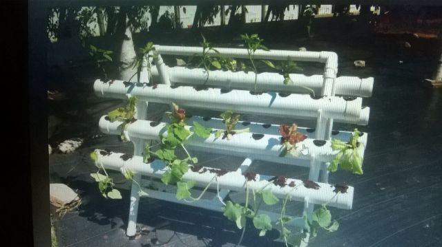 horta em tubo pvc faça sua horta t em os a melhor solução para