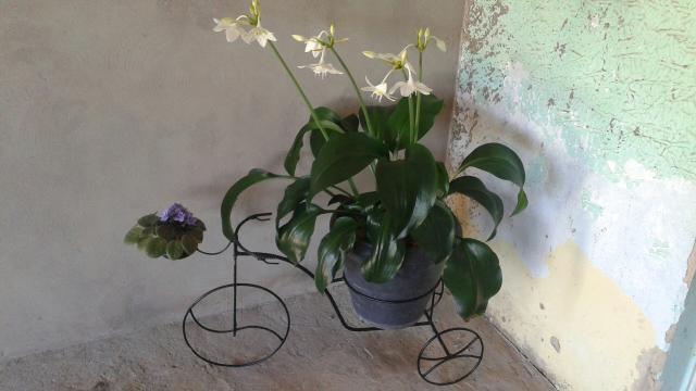 enfeite jardim bicicleta:bicicleta para jardim deixe seu jardim mais bonito suporte de vaso em