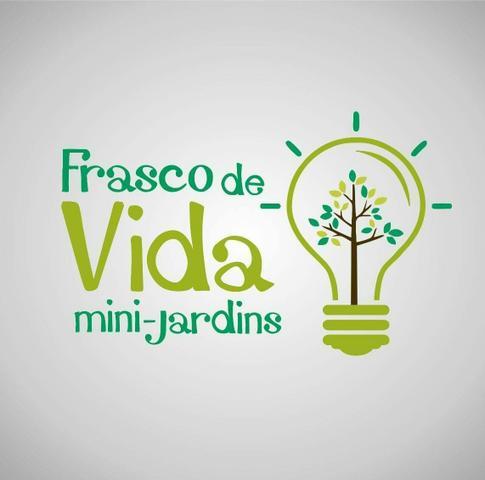 mini cactus suculentas hidro cultura Vazlon Brasil