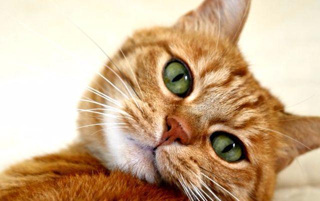 cuido do seu gatinho enquanto voce viaja   Vazlon Brasil