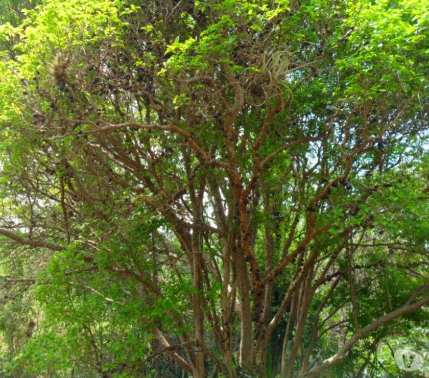 denominado sitio jequitiba na fazenda de vargem  Vazlon Brasil