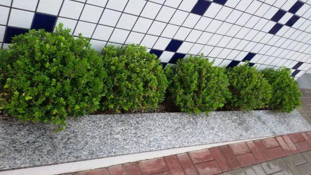 jardim vertical fortaleza ? Doitri.com