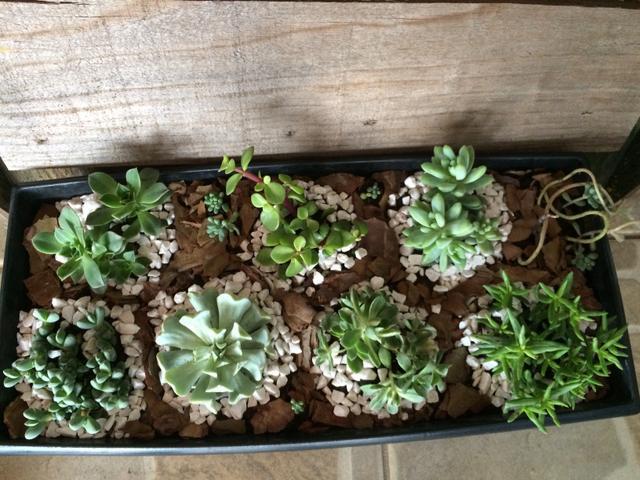 mini jardim de cactus:mini jardim de suculentas mini jardim com diferentes espécies de