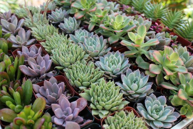 suculentas e plantas de todos os tipos fazemos diversos serviços de