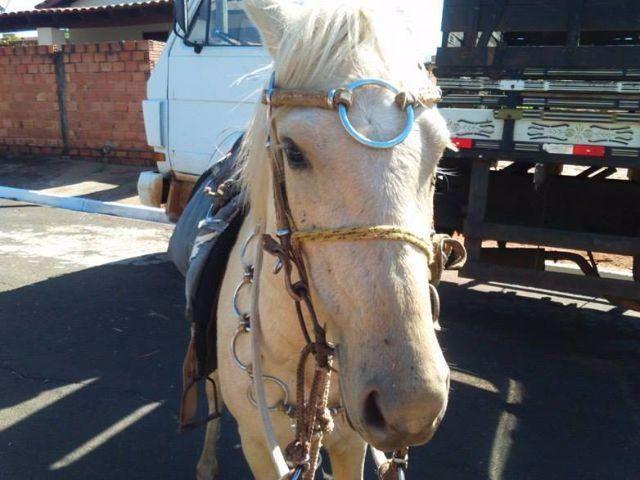 Fazenda Santa Helena Quarto De Milha ~ quarto de milha vendo cavalo quarto de milha baio marinho 2 anos de