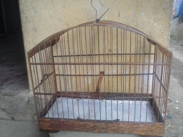 Vendo uma femea de trinca ferro rio de janeiro aves for Vendo capannone in ferro