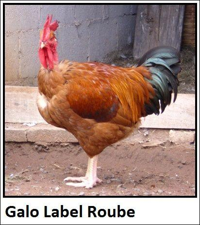 Galo Label Rouge