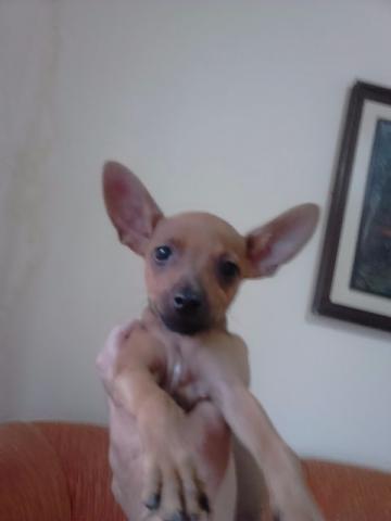 Pinscher zero so hoje maio big dog loja vazlon brasil - Zero piscina busto arsizio ...