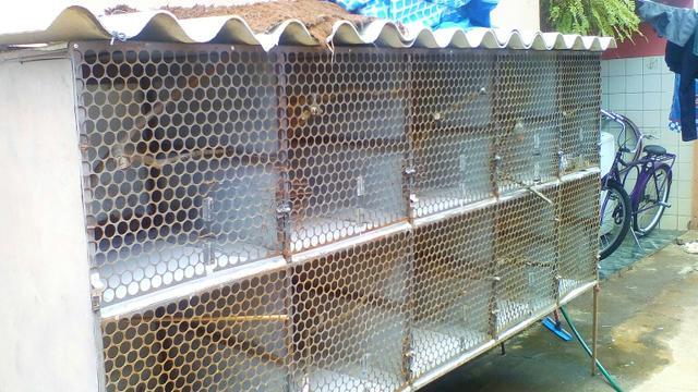 Vendo viveiro de ferro vazlon brasil for Vendo capannone in ferro