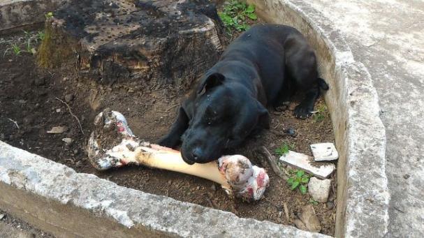 Http Dogtime Com Dog Breeds Staffordshire Bull Terrier Slide