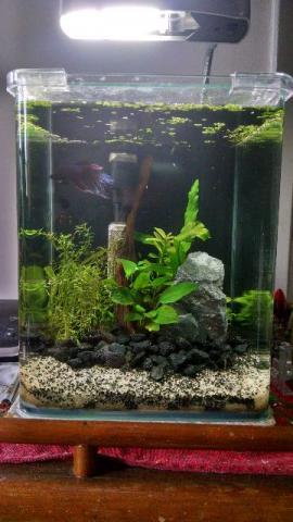 Termostato para aquario de 5 litros