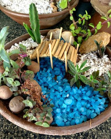 mini jardim com cactos e suculentas Vazlon Brasil