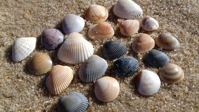 Adesivo Tema Festa Junina ~ artesanato feito de conchas do mar Vazlon Brasil
