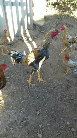 Botando as galinha pra correr escola estadual muriaeacutemg - 3 4
