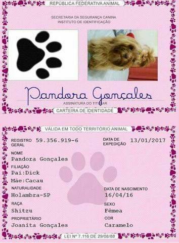 ec6d696ed carteira de identidade e certidao de nascimento pet   OFERTAS ...